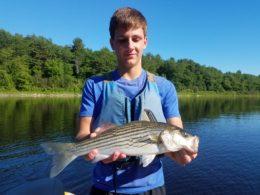 Kennebec River Striper