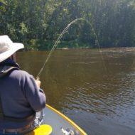 Androscoggin River flyfishing